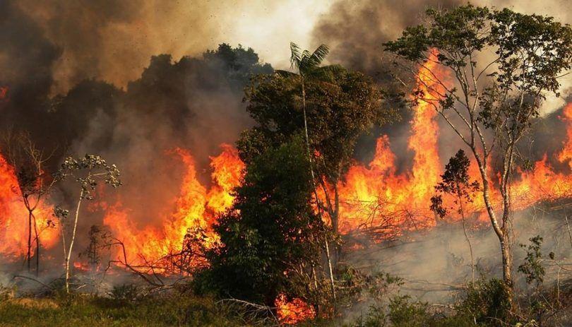 حقائق جديدة تكشف تورط أشخاص خارج الجزائر في الحرائق الأخيرة
