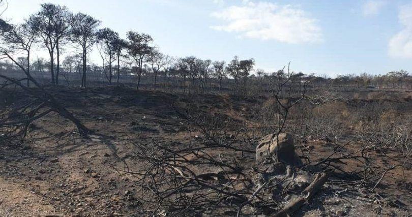 إعلان غابة بولاية غربية منطقة منكوبة