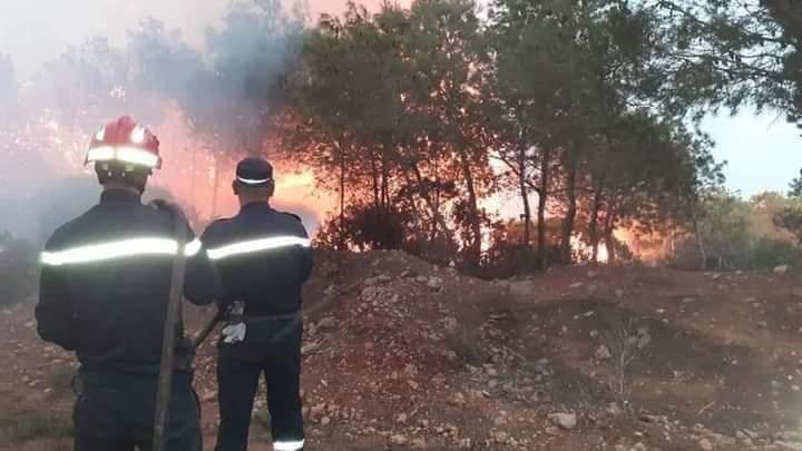 الحصيلة الأولية لحرائق الغابات في الجزائر