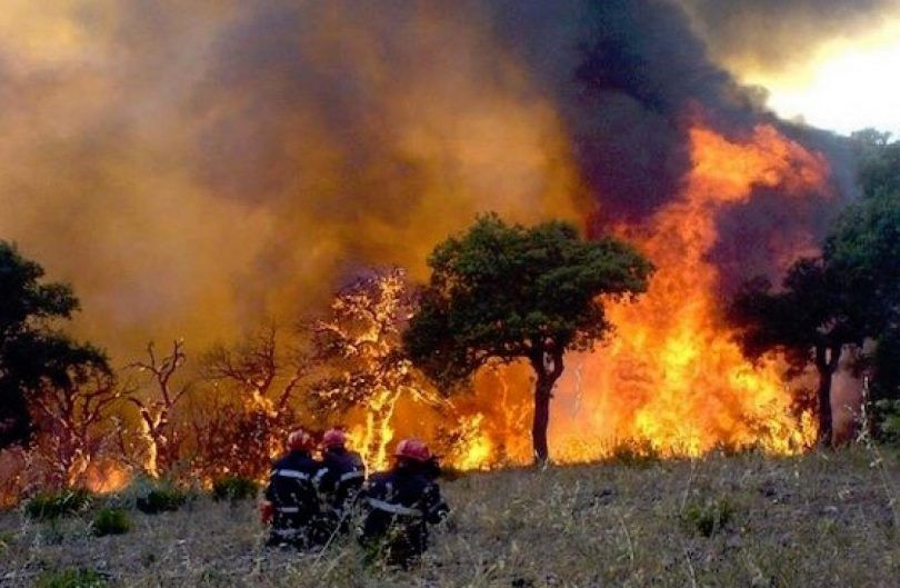 المدير العام للغابات يدعو الوزارات لتوقف عن التشجير العشوائي