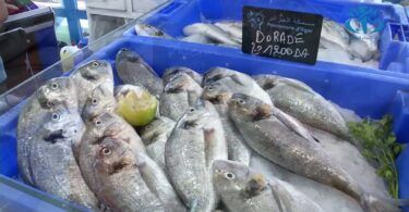 فروخي: مشكل ارتفاع أسعار السمك تعيشها عدة دول وليس الجزائر فقط